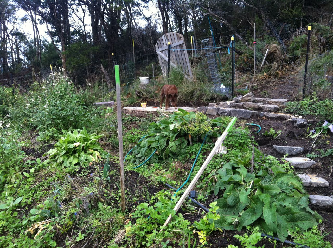 Picture of top part of vege (house) garden. Garden is terraced into the hill. New blue stone steps can be seen.